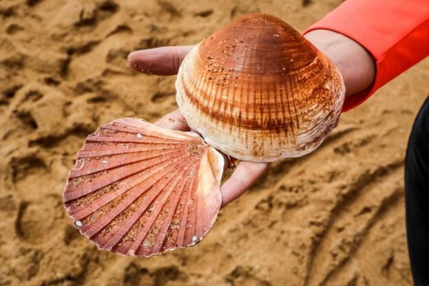 Portugalia Algarve Praia de Carvoeiro 2