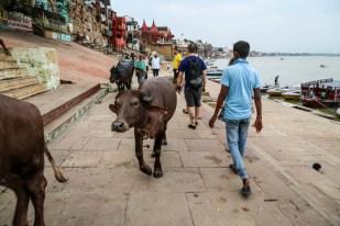 Indie Waranasi spacer wzłuż brzegu rzeki