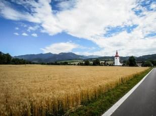 Wycieczka rowerowa wokół Tatr - pola przenicy
