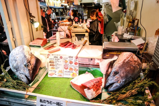 Targ Tsukiji Tokio ogromny tuńczyk