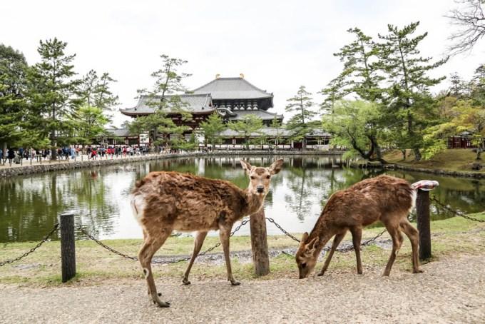 Todaiji Nara