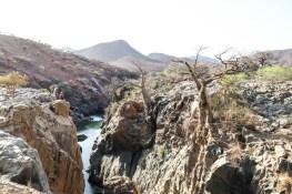 Epupa Falls baobaby