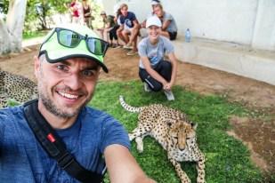 Na farmie gepardów