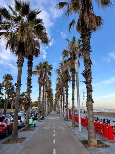 Palmy przy plaży Barceloneta