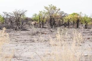 Safari w PN Etosha nosorożec