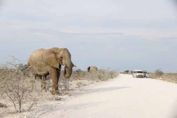 Safari w PN Etosha słoń przy drodze