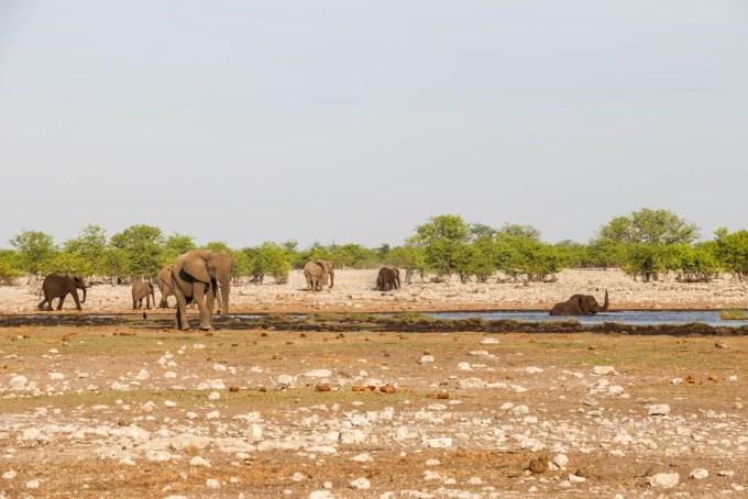 Safari w PN Etosha słonie w oczku