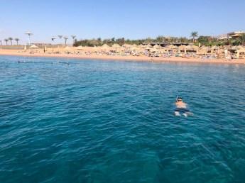 Akaba snorkeling