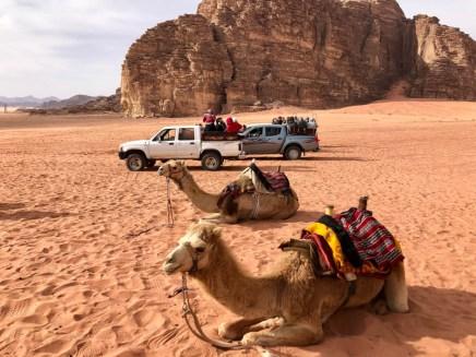 Wycieczka jeepami Wadi Rum wielbłądy