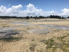 Tanzania Mbezi Beach odplyw wycieczka