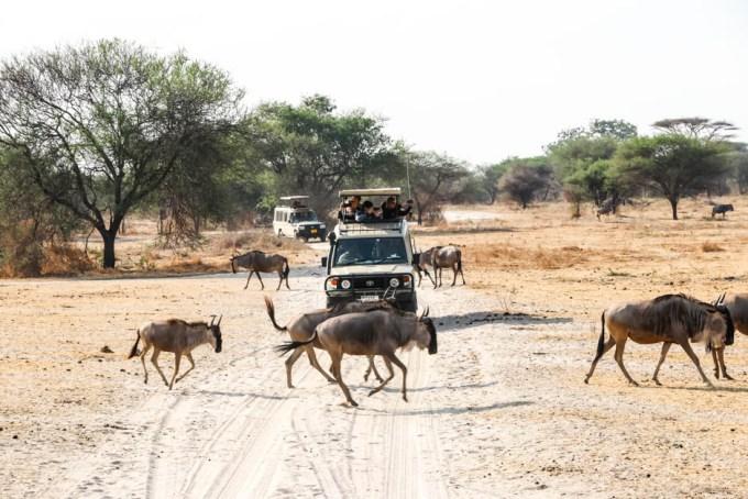 Tanzania PN Tarangire gnu droga
