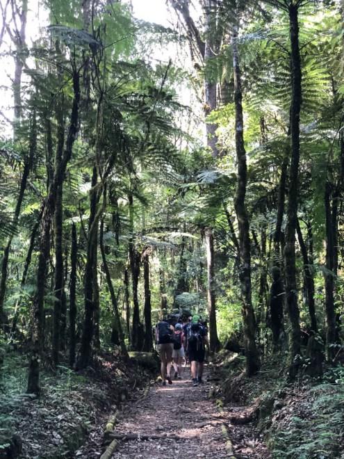 Trekking Kilimandzaro las dzeszczowy