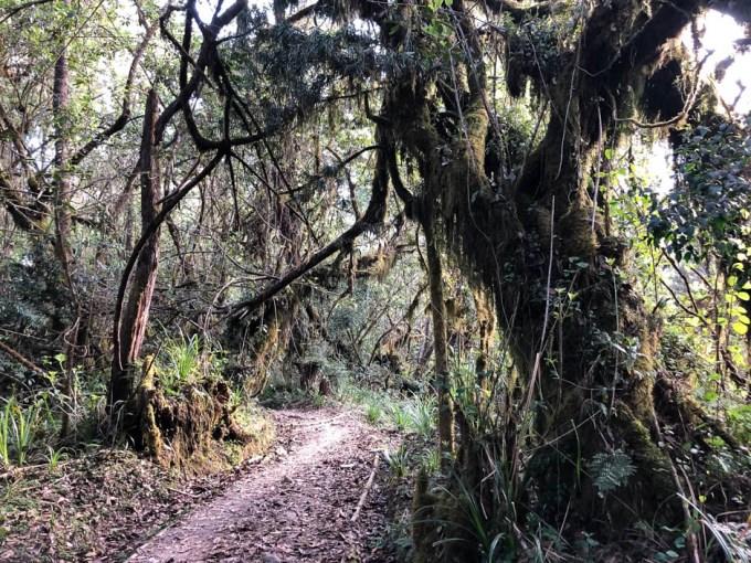Trekking Kilimandzaro przez las tropikalny