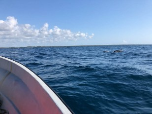 Zanzibar rejs delfiny