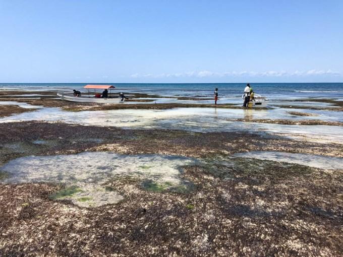 Zanzibar rejs powrot odplyw 2