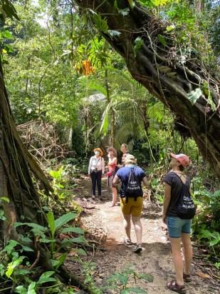 Palenque ruiny dzika część