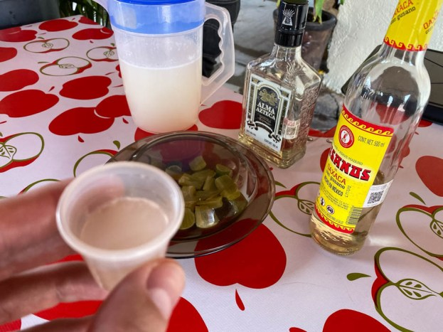 Pulque mezcal i tequila