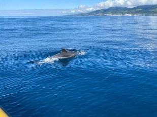 Azory rejs delfin