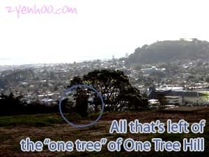 All that's left of the one tree of One Tree Hill