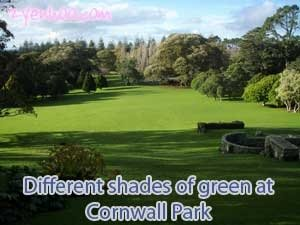 Different shades of green at Cornwall Park