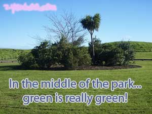In the middle of the park... green is really green!