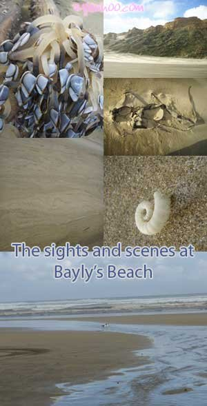 The sights and scenes at Bayly's Beach