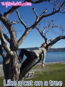 Like a cat on a tree