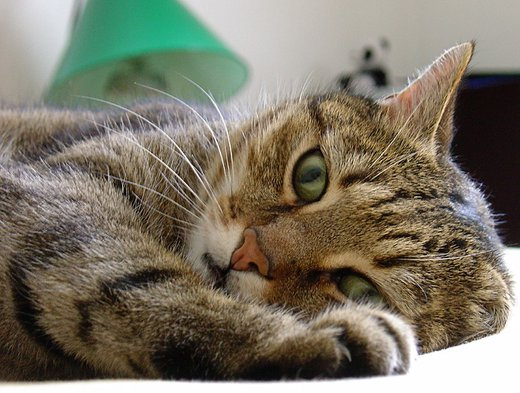 Zimmerpflanzen Ungiftig Fr Katzen