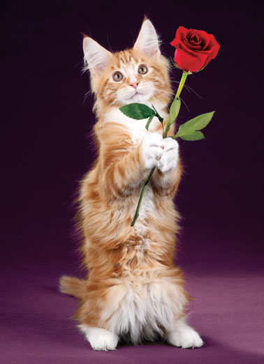 "Funny Valentine's Day Ecard ""Rose Cat"" From CardFool Com"