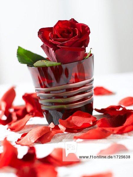Rote Rose im rotem Glas  Lizenzfreies Bild  Bildagentur
