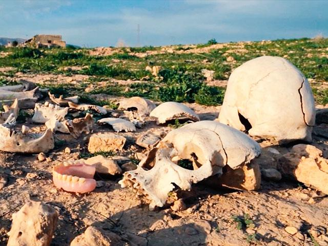 genocide human skulls
