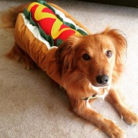 Hot Dog - The Best Dog Costumes on Instagram - Livingly