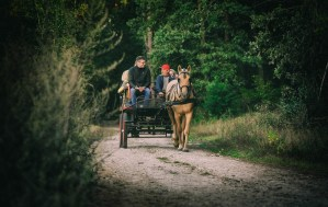 Horse & cart - why the scepticism of speed when it comes to rapid weight loss?-3747206_1920
