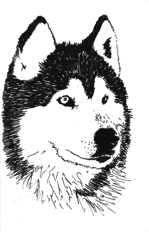 Coloriages  imprimer  Chien numro  672633