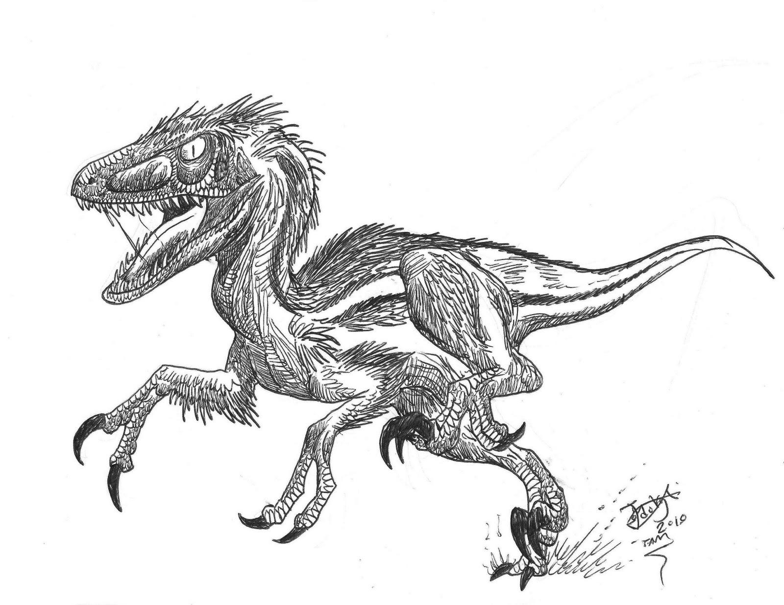 Coloriages A Imprimer Velociraptor Numero