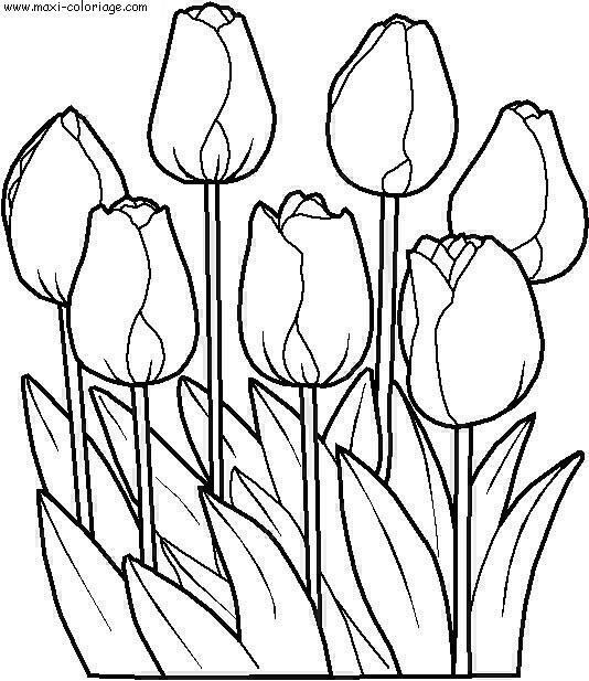 Coloriage A Imprimer Nature Fleurs Numero