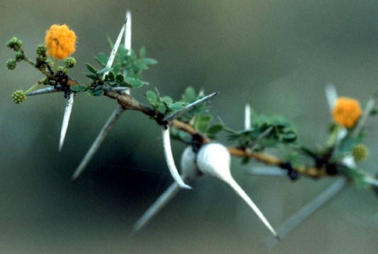 Plants Herbivores And Predators