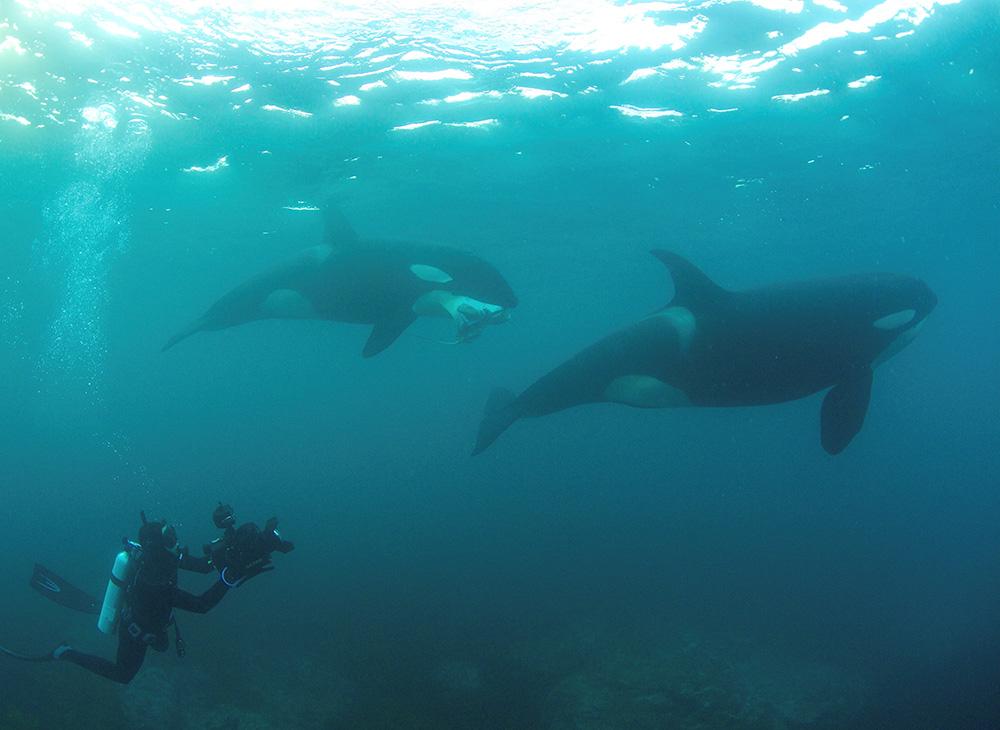 Steve Hathaway - Orcas