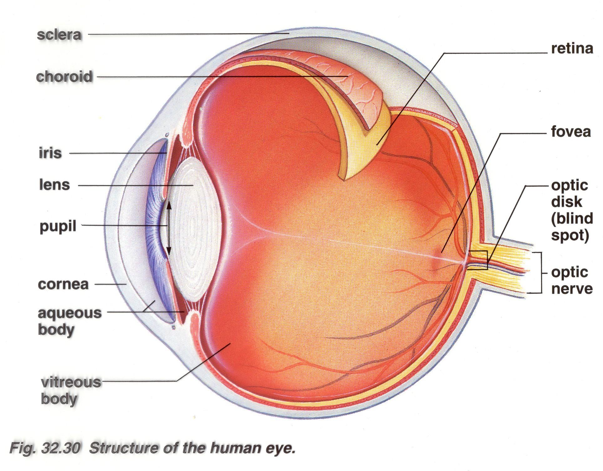 hight resolution of label the eye diagram quiz