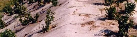 paillis biodegradables plantcobio
