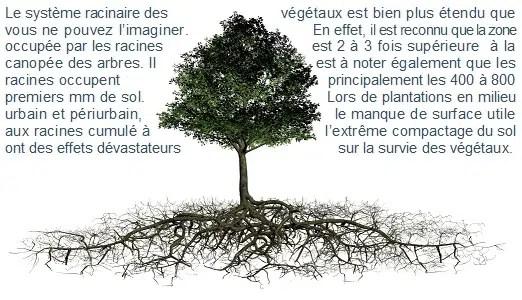 racines rootstock