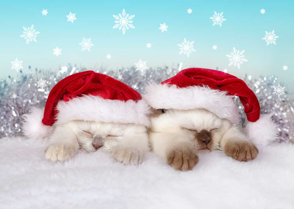 12 Portraits Of Pets In Christmas Costumes The