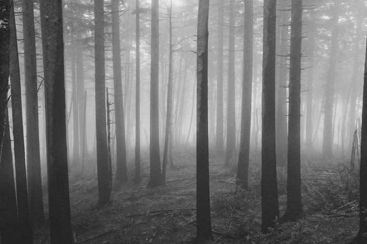 50 Shades Of Gray Exploring The Visual Tension Between