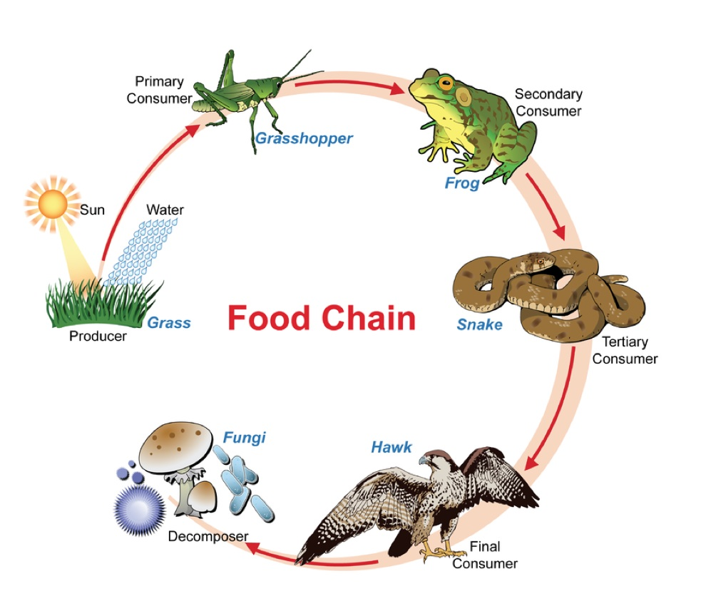 wolf food chain diagram general electric refrigerator parts webs