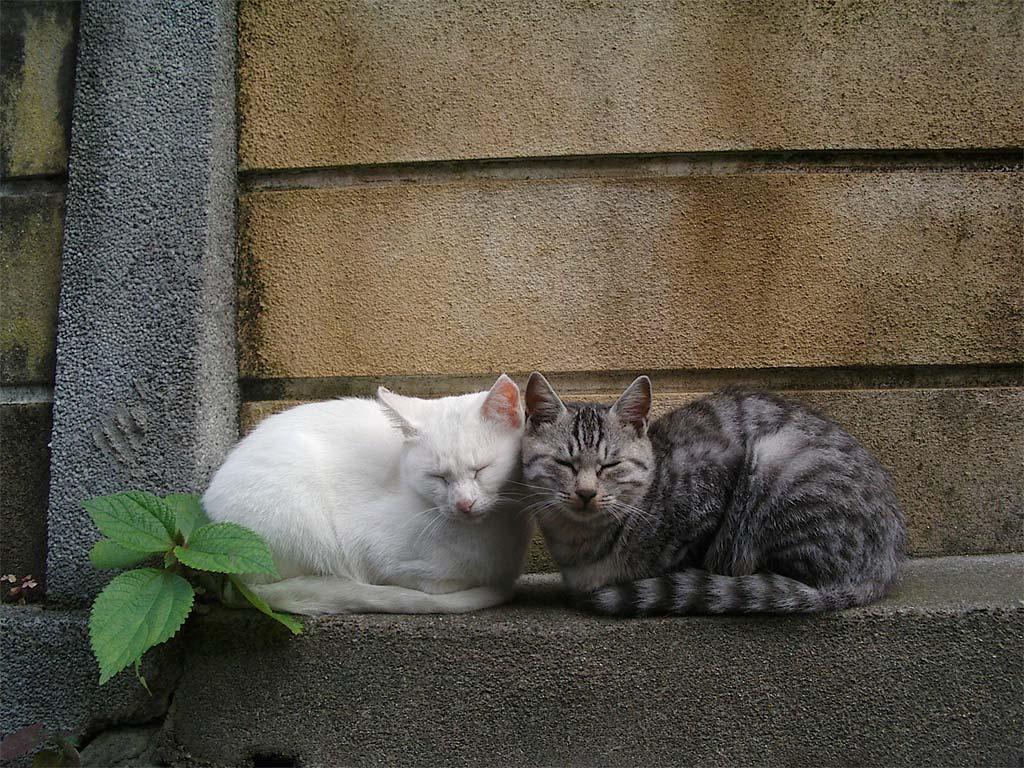 桌布下載 - 動物桌布 - 可愛小貓