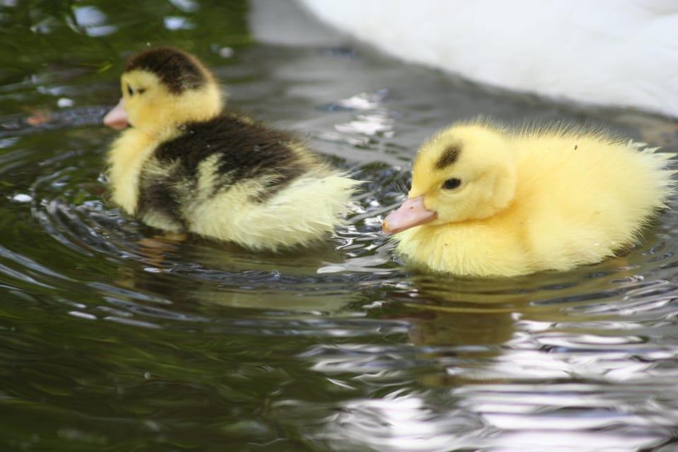 Zwemles_hoeve_Engelenburgh