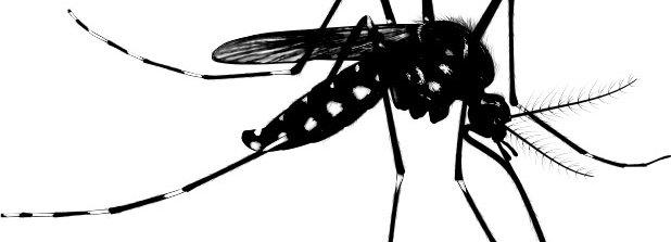 Mosquito Vision