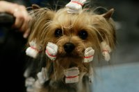 Dogs Have Bad Hair Days Too - Dog Hairstyles - Zimbio