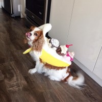 Banana Split - The Best Dog Costumes on Instagram - Livingly