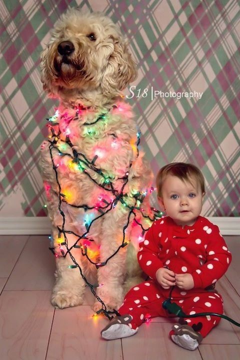 Libra Quotes Wallpaper Dog Days Of Christmas Holiday Family Photo Ideas That